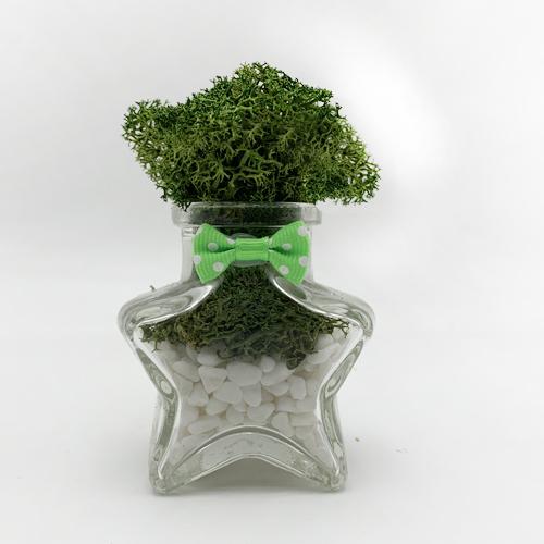 스칸디아모스 공기정화 식물 천연제습제 별화분모스, 모스그린