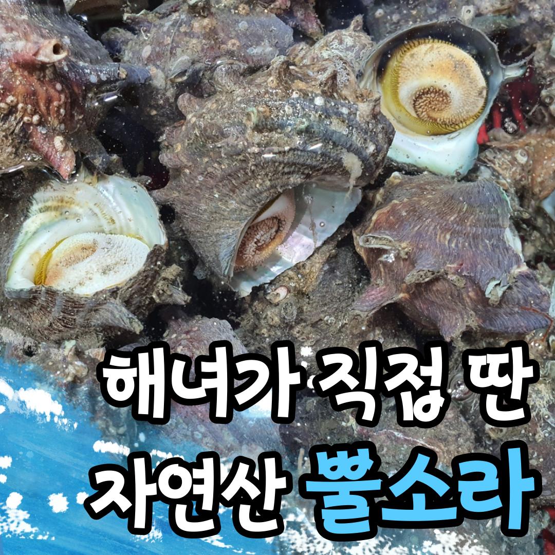 해녀채취 산지직송 자연산 통영 참 뿔소라 소라 1kg 2kg, 뿔소라(대)_2kg