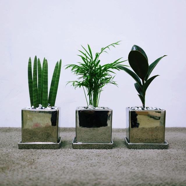 꽃피우는청년 실내공기정화식물 실버 화분 3종 세트 (테이블야자 멜라니고무나무 스투키)