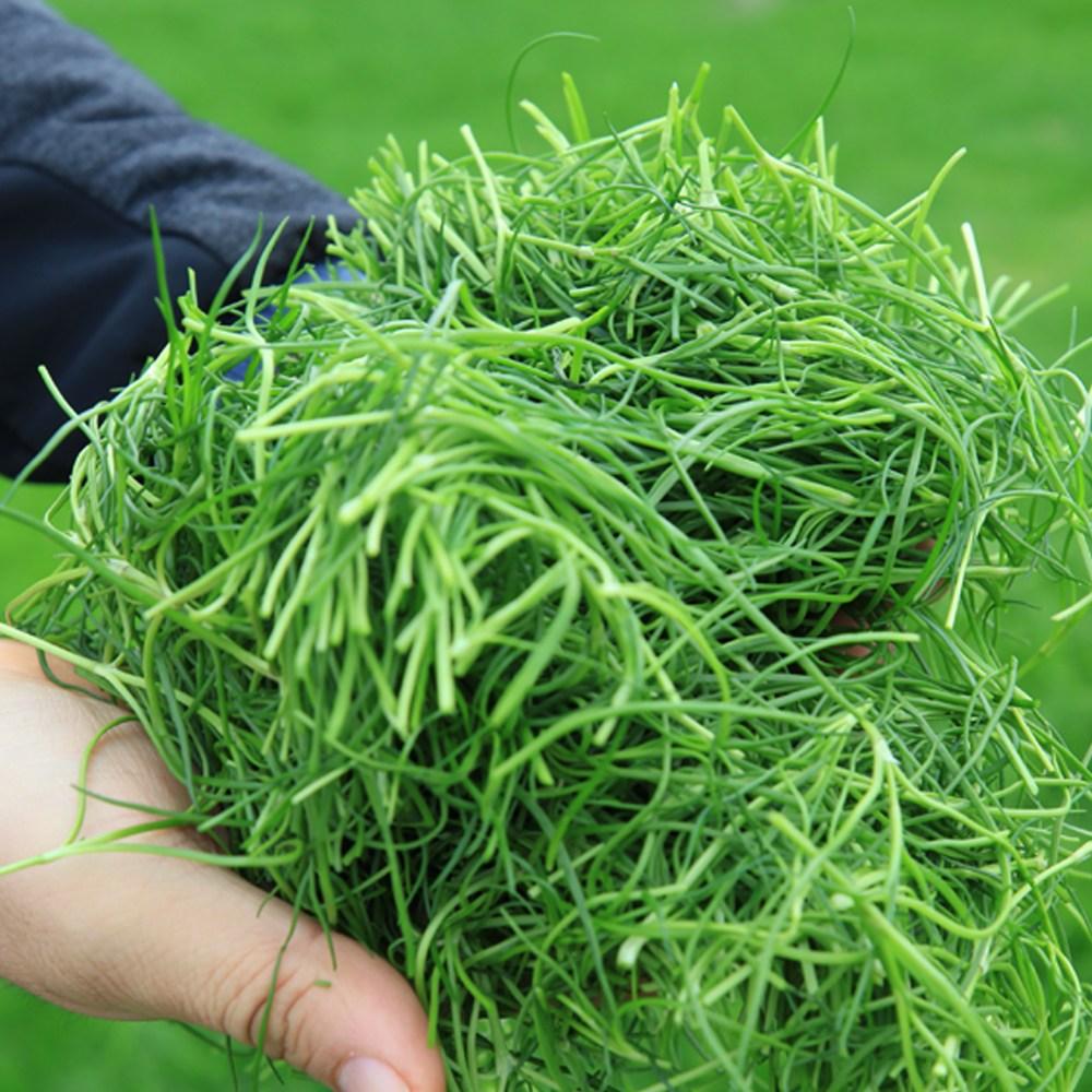 신안 비금도 청정갯벌에서 자라는 세발나물 비름나물 1kg