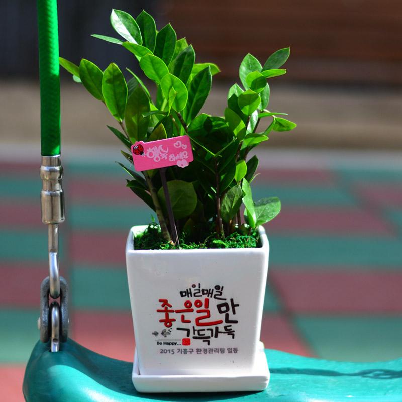 미나의정원 선물용 메세지화분 개업화분, 금전수 정사각화분, 디자인번호 06