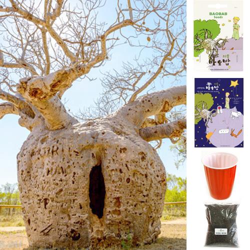 리틀바오밥 바오밥나무 씨앗 8종 DIY세트 + 사은품4종, A-5 그레고리, 1팩