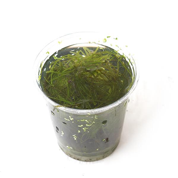 모스 한컵(종이컵), 단품