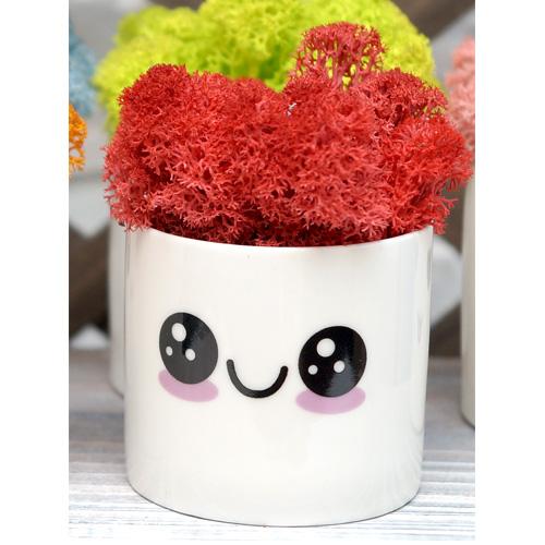 스칸디아모스 천연이끼 공기정화 이모티콘 화분, 이모티콘 모스-레드