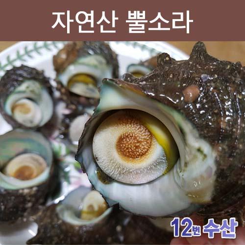 통영12번수산 자연산 뿔소라, 1봉, 1kg (10~12미 내외)