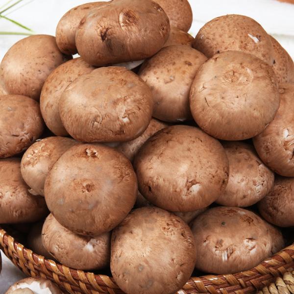보령명품양송이버섯 포타벨라, 500