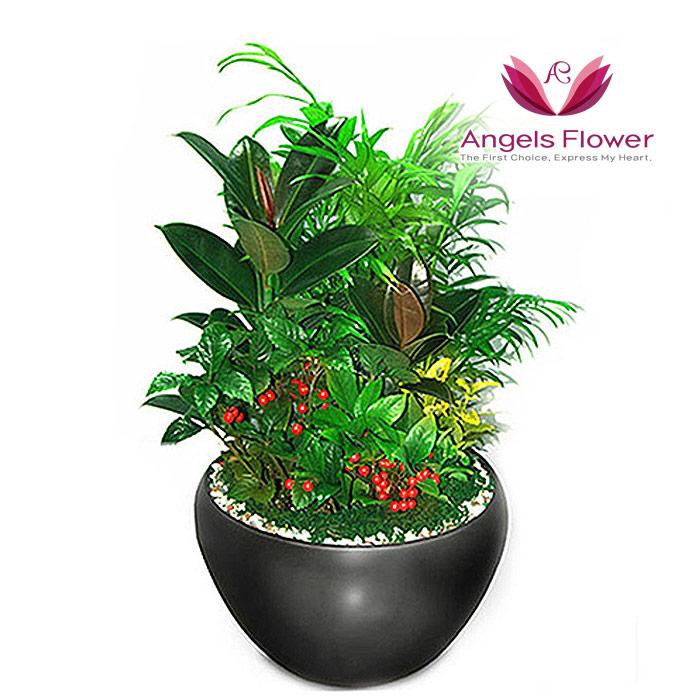 [엔젤스플라워] 마음을 전하는 축하화환 근조화환 축하화분 관엽식물 지역한정특가 꽃화환