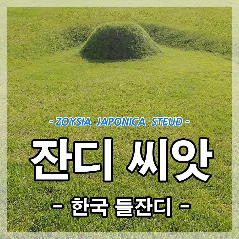 광림아그로 한국잔디씨앗 20g(1제곱미터용)잔디씨 산소 정원 공원 들 종자 묘지, 1개