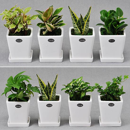 가꾸지오 공기정화식물 먼지제거 인테리어식물 사각화이트화분4p세트, 사각화이트하분4p-내맘대로세트