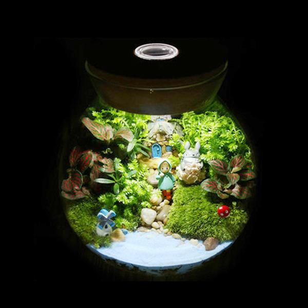 집들이 선물 테라리움 다육 식물 다육이 인테리어 화분, 불빛 코르크 병(중)