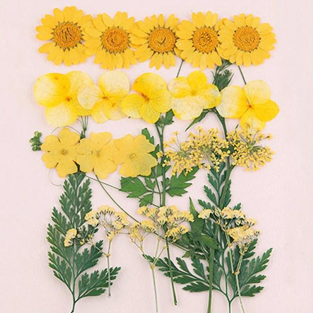 학생백화점 압화 꽃 종합팩, [FP/K104]압화종합팩
