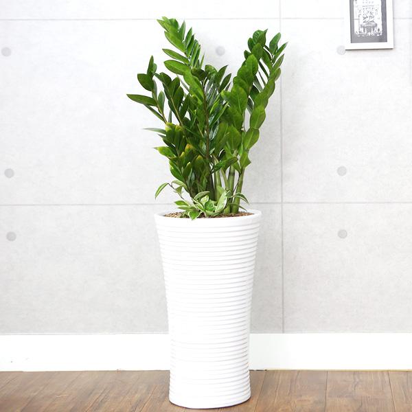 다덴다플라워 공기정화식물 중소형 화분 개업식 집들이 축하 선물, 10_금전수