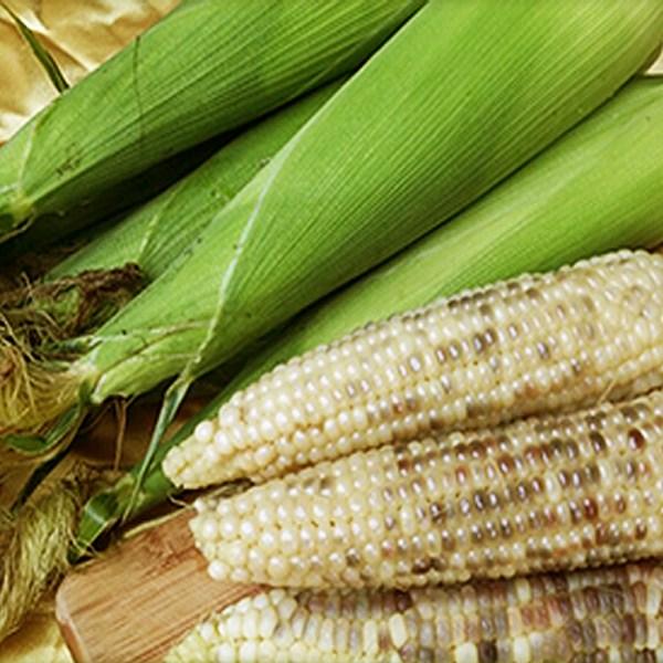 강원도옥수수 찰옥수수 햇 옥수수 유기농옥수수 2kg, 1박스, 흑찰옥수수 2kg