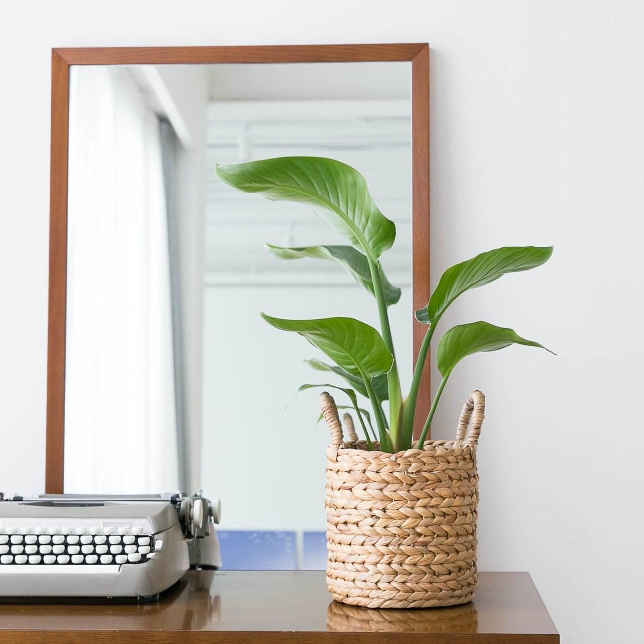 피움플랜트 극락조 외 14종 인테리어식물, 1-1 (소형)극락조 + 라탄바구니, 1set