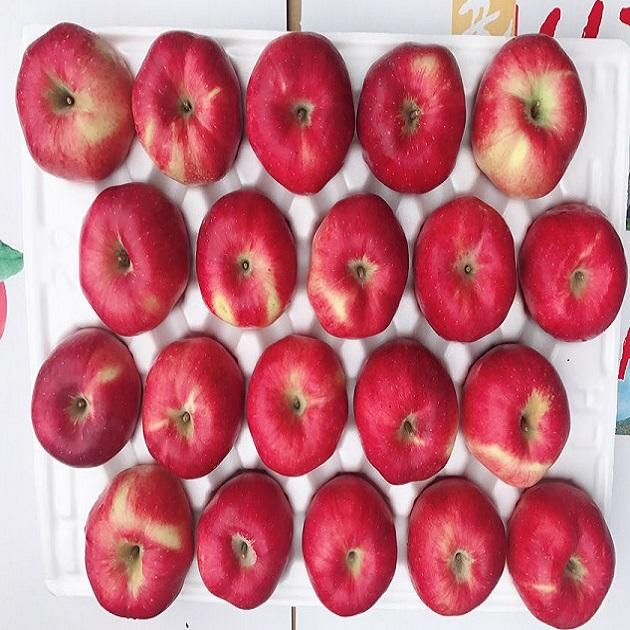 [고운사과]청송사과 꿀 사과 20년도 햇부사 가정용 선물용, 1box, ④5kg가정용흠과13~18과(크기혼합)