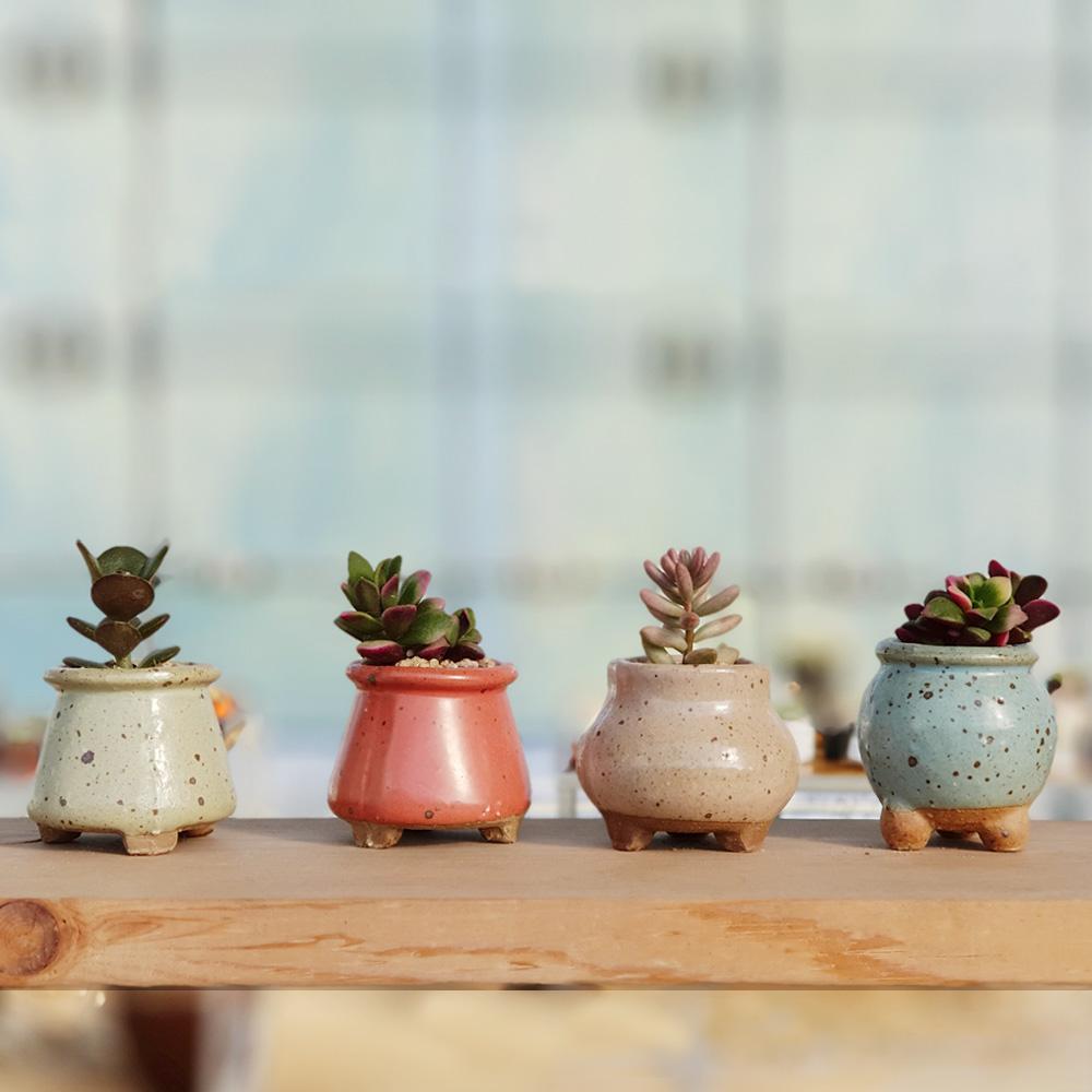 하늘정원 미니화분과 다육식물 4종 세트, 단일상품