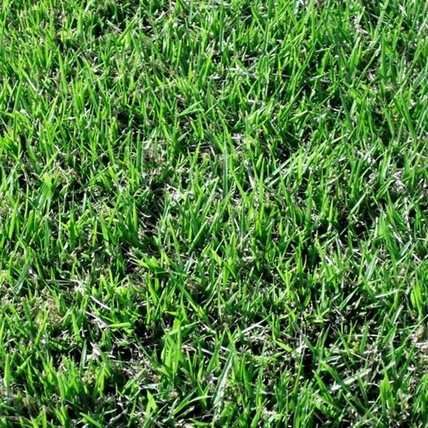 켄터키블루그라스 씨앗 1kg 조경용 잔디