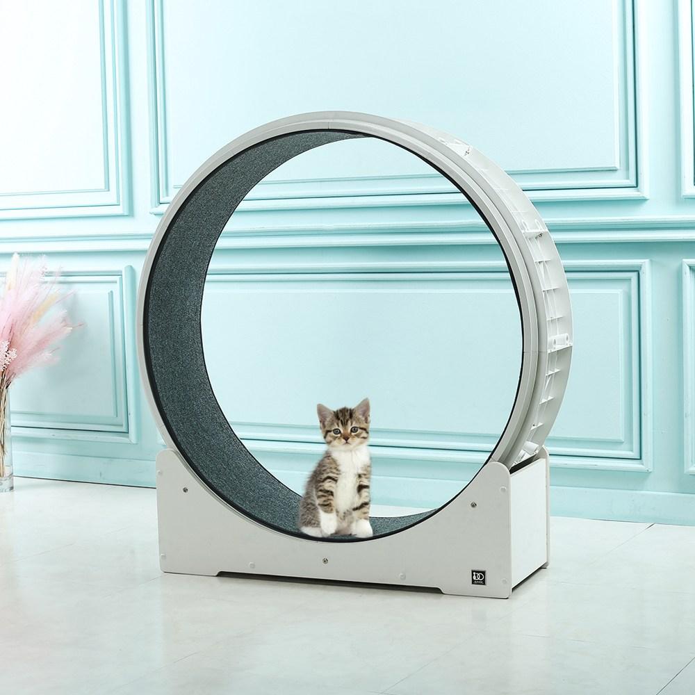 모든펫 디어마이프렌즈 캣휠 고양이운동기구 캣타워, 1개