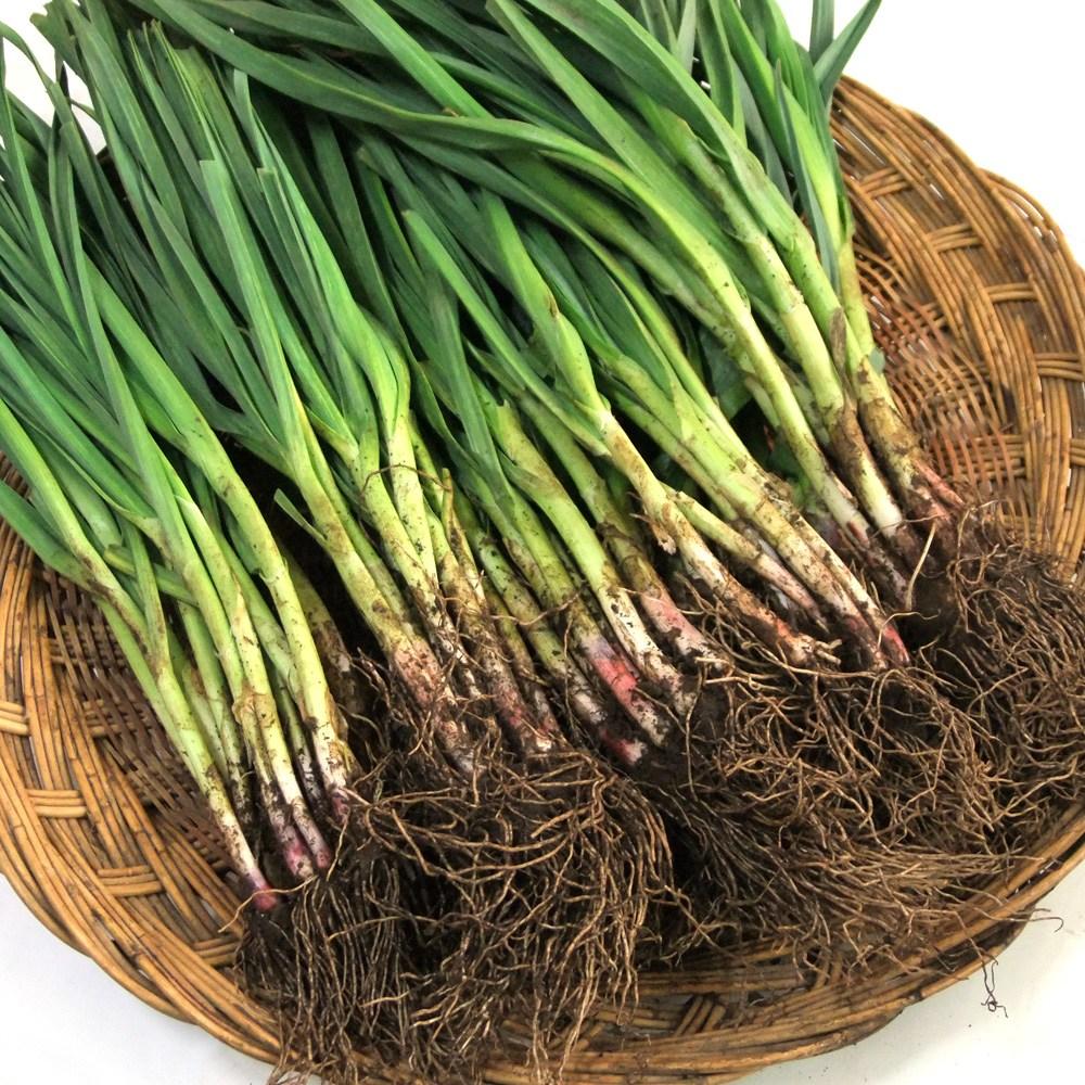국내산 풋마늘 잎마늘 2kg내외, 1단