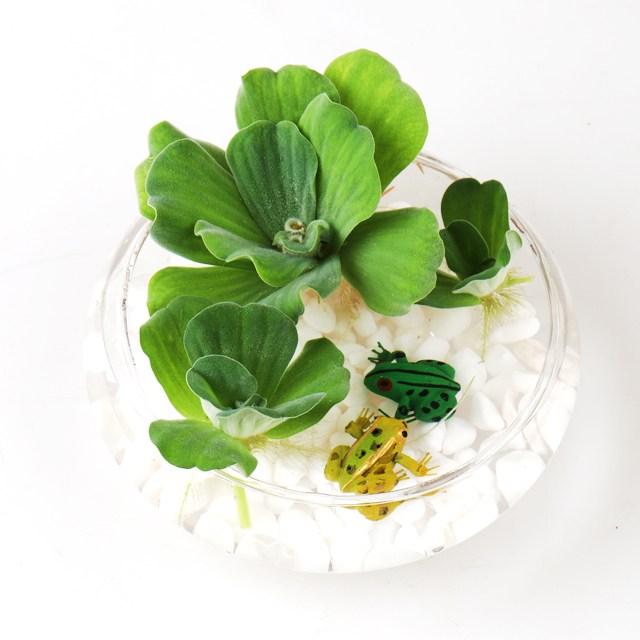 갑조네 부레옥잠 물배추 수경식물 수경재배 공기정화식물 먼지먹는식물 미세먼지제거, 1개