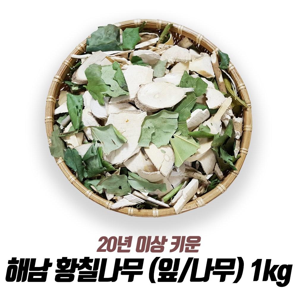 해남 황칠나무 잎 나무 1kg, 1개