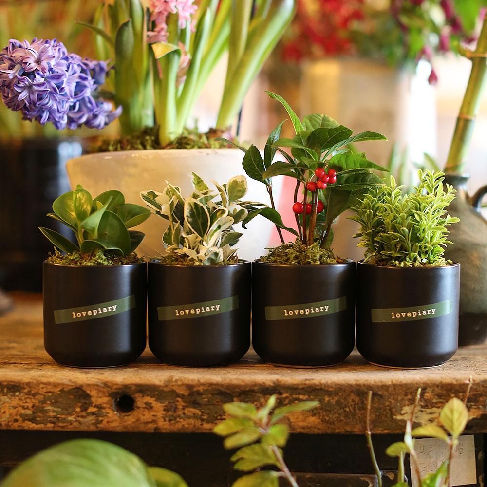 (미니화분4종세트)집들이.개업선물 실내공기정화식물, 미니공기정화식물 4종세트[화이트]