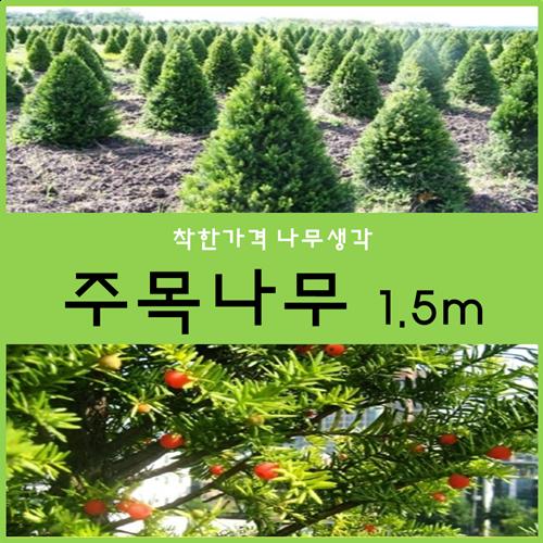 착한가격 나무생각 주목나무1.5m(착불 개별화물택배)