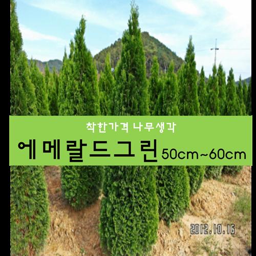 착한가격 나무생각 에메랄드그린50cm~60cm